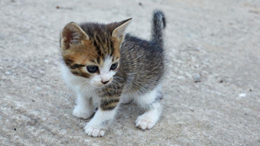 Beglobis kačiukas ieško namų