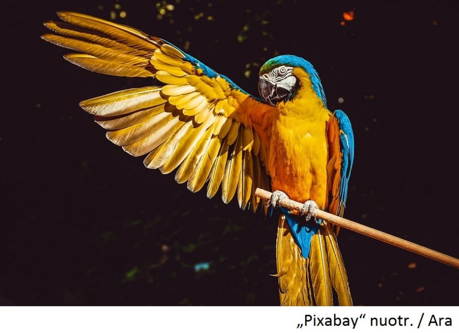 Naujiena veterinarijos kabinete KIKA – paukščio lytį gali nustatyti iš plunksnos
