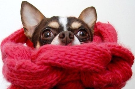 Brrr, kaip šalta! Renkame drabužėlius šunims