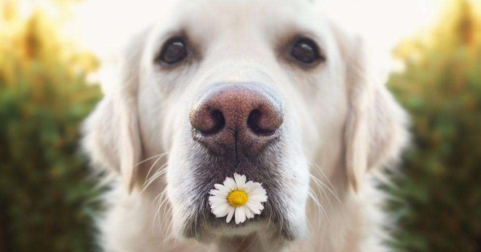 Kaip prižiūrėti šuns kailį?