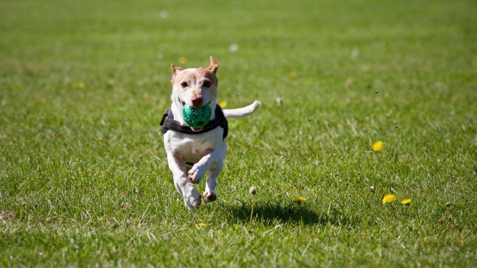Šuns priežiūra: žaidimai ir judrumas