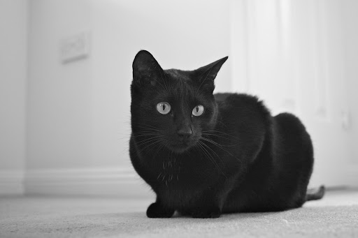 Šiaulių beglobiai kačiukai ir šuniukai greičiau suras naujus namus