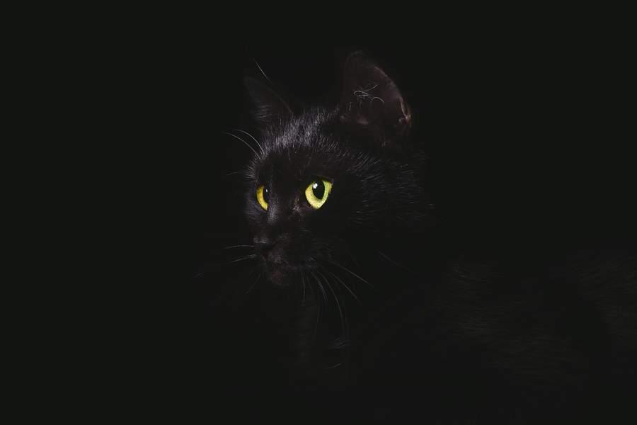 Pavojus tamsoje – apsaugokite savo augintinį