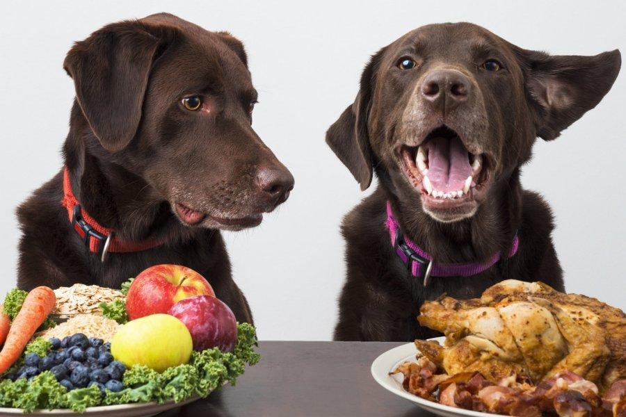Ypatinga šunų mityba