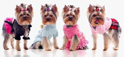 Rūbeliai šunims – kad nesušaltų ir gražiai atrodytų