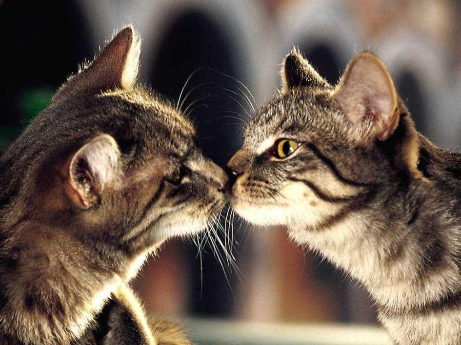 Kačių kastracija/sterilizacija. Kada ir kodėl?