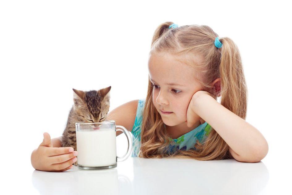 Ar reikia katėms duoti pieno?