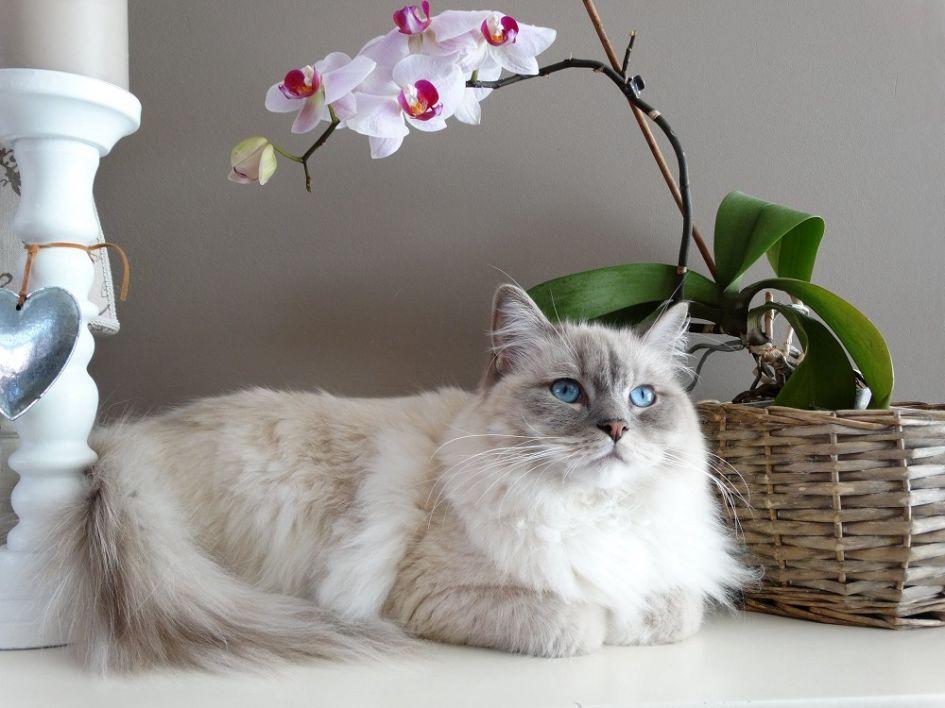 Lašišų aliejus: mažiausiai 5 priežastys, kodėl jis būtinas šunims ir katėms