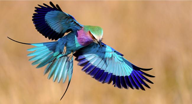Naujas šeimos narys jūsų namuose - paukščiai
