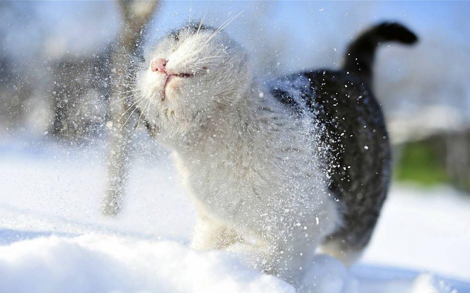 PATARIMAI: kačių priežiūra žiemą
