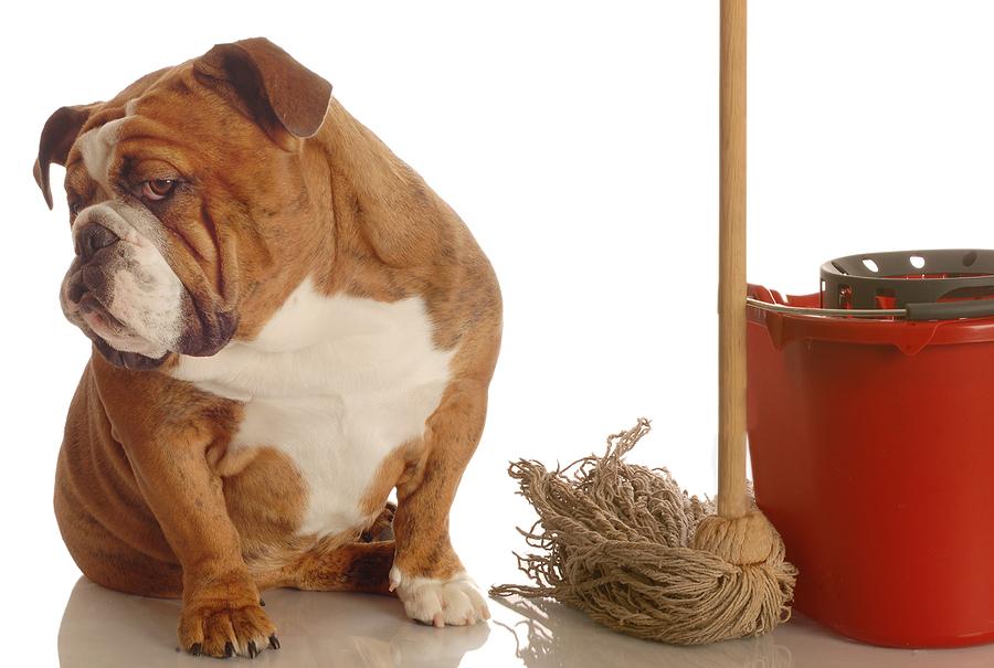 Gamtiniai reikalai: šuniuko pratinimas prie tualeto, patinų teritorijos žymėjimas