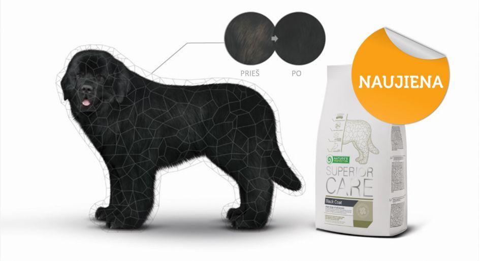 Puiki naujiena šunų augintojams: išsiaiškinta, kas lemia juodo kailio spalvos pokyčius!
