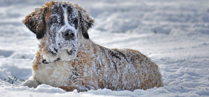 PATARIMAI: šuns priežiūra žiemą