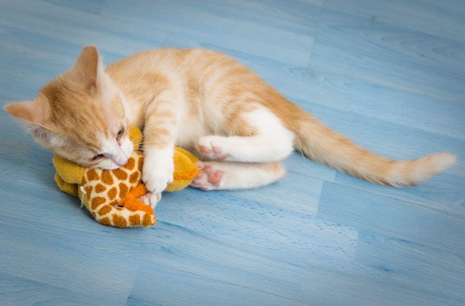 Kačiukų mityba – pirmasis kąsnelis