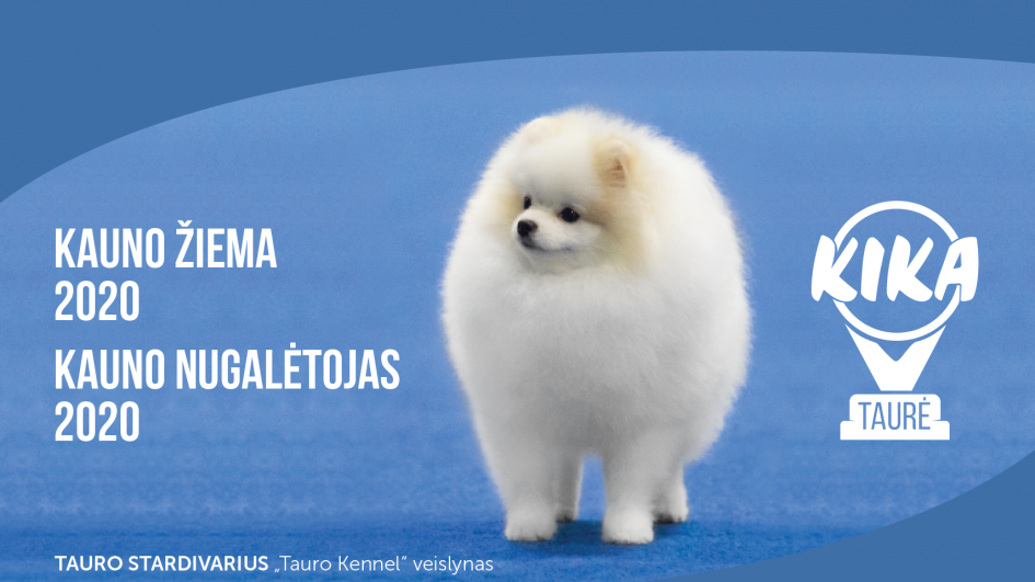Kviečiame į tarptautines visų veislių šunų parodas!