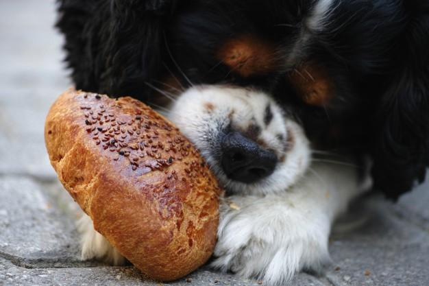 Pavojingi maisto produktai šunims