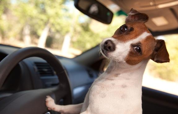 Augintinio saugumas: kaip išvengti nelaimių keliuose?