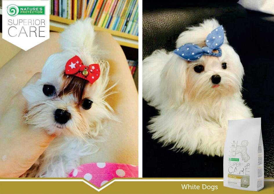 """""""White Dogs"""" pašaro sėkmės istorijos Pietų Korėjoje"""