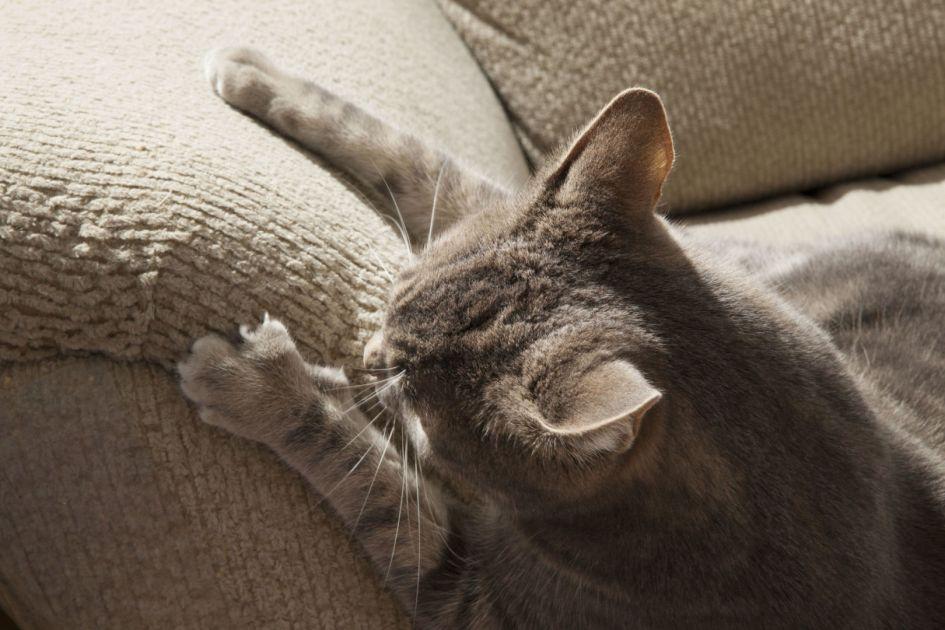 Katė drasko baldus?