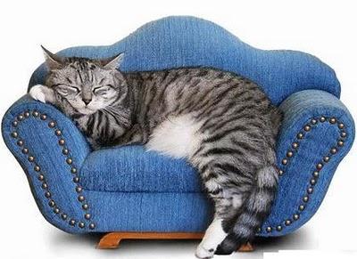 Pažinkite savo katę: miegojimo ypatumai