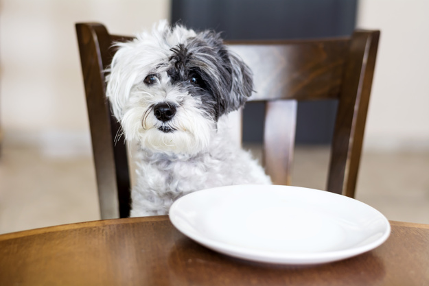 Ekspertai įspėja: šeriate augintinį maistu nuo stalo? Jo gyvybei gresia pavojus!