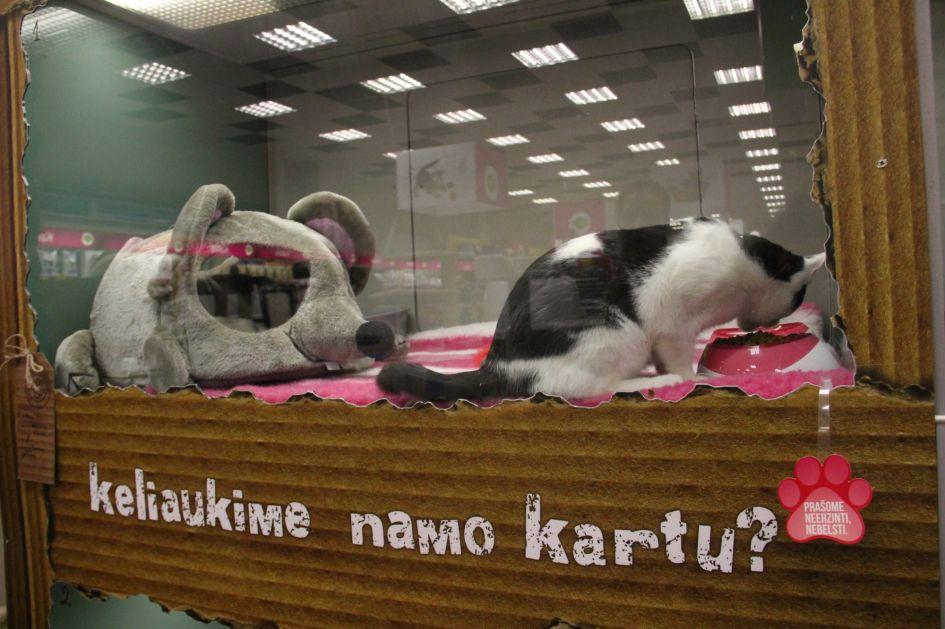 Šiauliuose beglobiai gyvūnai laukia dar vienoje KIKA parduotuvėje