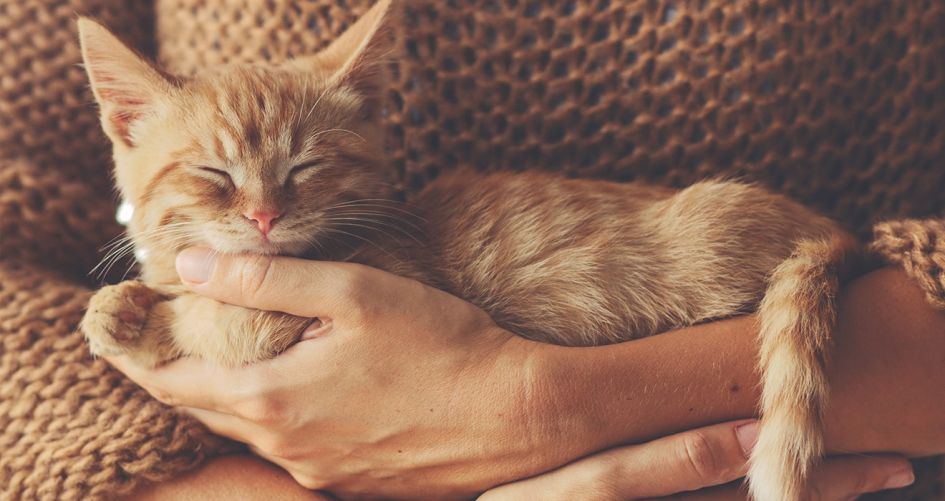 Kokie skanėstai tinka katėms?