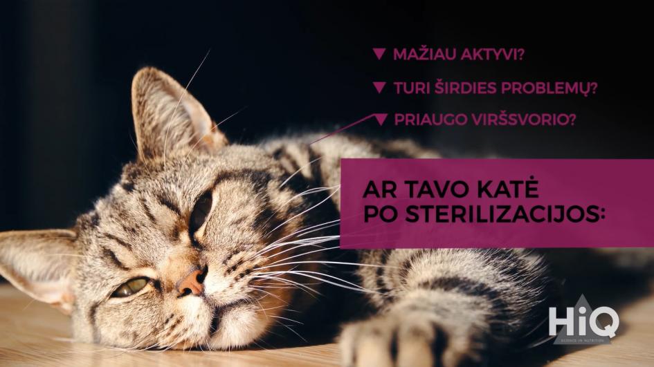 Kaip teisingai išrinkti pašarą sterilizuotai katei?
