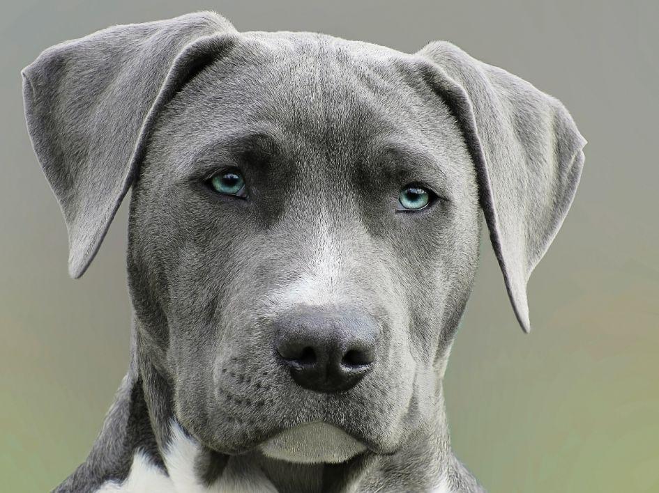 Ką daryti, jei šuo alergiškas glitimui?