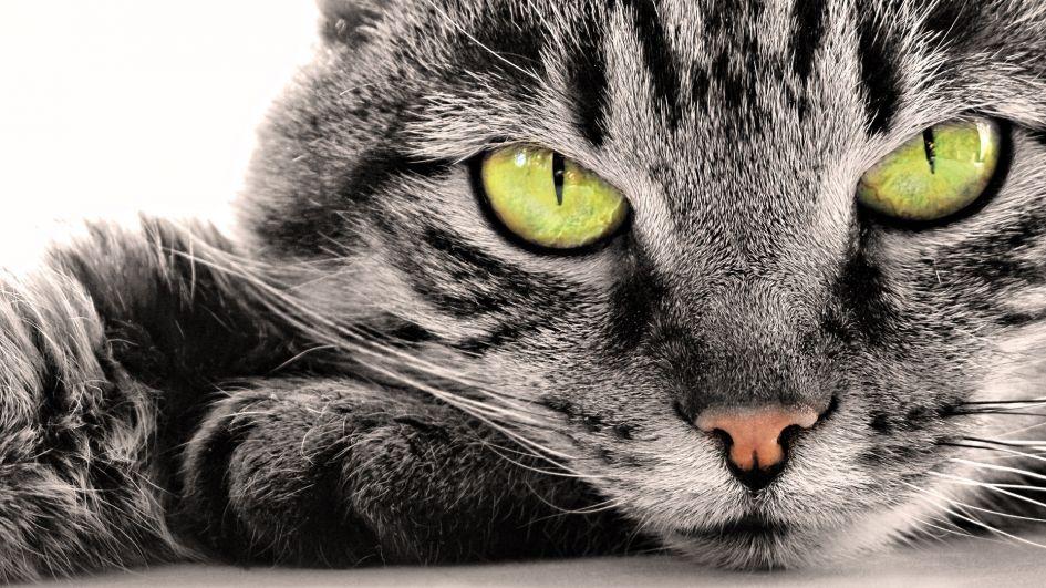Kaip prižiūrėti katės akis?