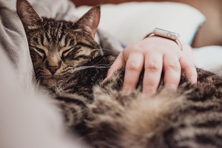 7 interjero idėjos kačių mylėtojams