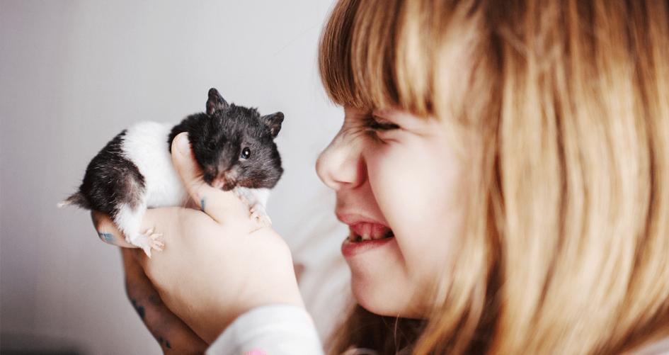 Kodėl žiurkėnai kandžiojasi ir kaip juos prisijaukinti?