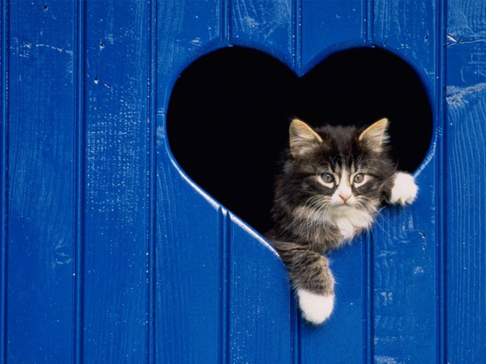 Veterinarijos gydytojos patarimai kačių laikytojams